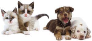 LF_Kittens_Puppies